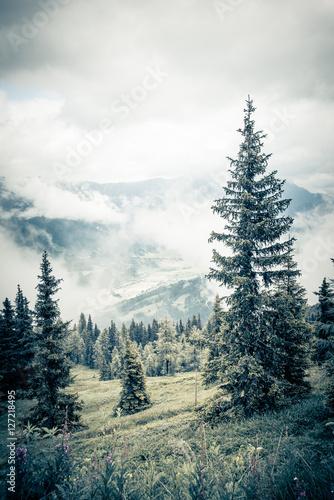Wald im Nebel - 127218495
