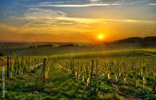Valokuva vineyard Bergerac two