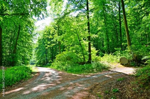 Deurstickers Groene Waldlandschaft im Deister, Niedersachsen