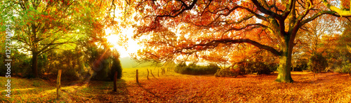 Landschaft im Herbst mit Wald und Wiese bei strahlendem Sonnenschein - 127230494