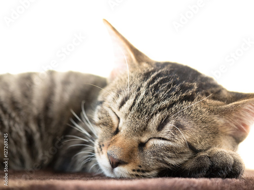 Poster 子猫の昼寝