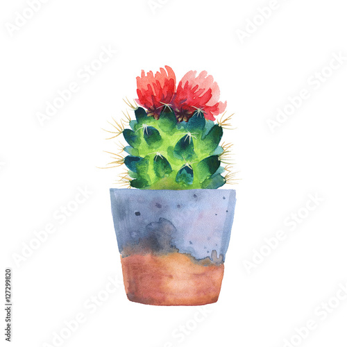 Watercolor succulent in a flowerpot. Isolated on a white background. Handdrawn green succulent in pot. Blossom watercolour cactus. Blooming cactus. Flower Illustration - 127299820