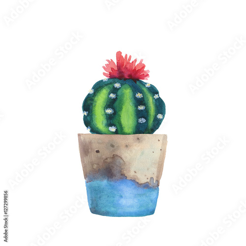 Watercolor succulent in a flowerpot. Isolated on a white background. Handdrawn green succulent in pot. Blossom watercolour cactus. Blooming cactus. Flower Illustration - 127299856