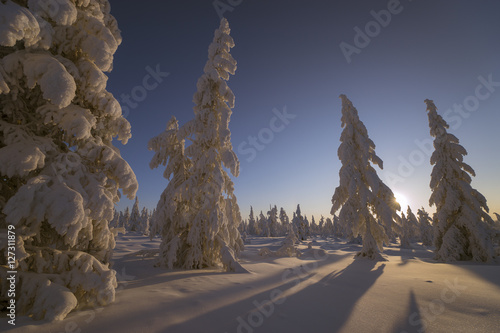 Winter landscape with forest, sun and snow. Poster