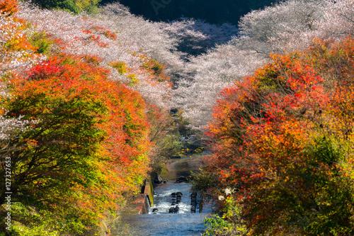 Poster Nagoya, Obara Sakura in autumn