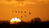 Flying birds over background landscape with orange sky - 127353445