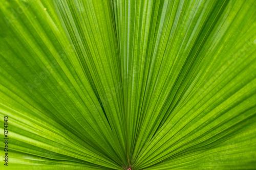 Palmenblatt - Nahaufnahme
