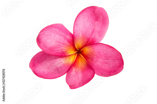 Fotobehang Plumeria pink plumeria isolated