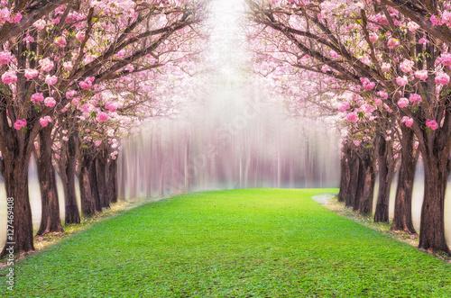 rozowa-aleja-drzew