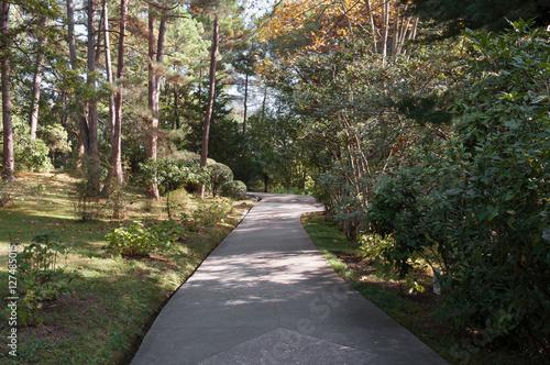 Fotobehang Tuin Парковые аллеи в ботаническом саду города Сочи, Россия