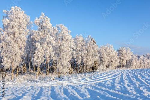 Papiers peints Bosquet de bouleaux Plowed field covered with snow at the woods