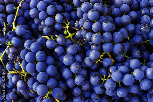 Red wine grapes background. Dark blue wine grapes. Poster