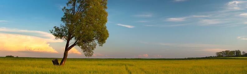 Fototapeta słoneczny dzień na łące - panorama