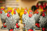 symbol of 2017 new year. year of the rooster. Figures in the form of cocks in the blur