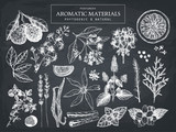 Vector collection of hand drawn perfumery materials and ingredients sketch. Vintage set of aromatic plants for perfumes and cosmetics on chalkboard - 127548231