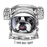 Buldog francuski Portret w hełmie astronauty