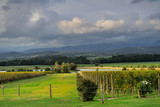 Yarra Valley vineyard in cloudy day