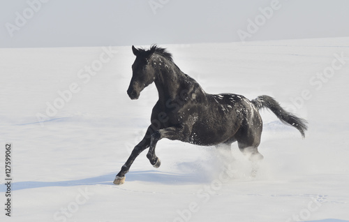 Poster, Tablou Pferd im Schnee