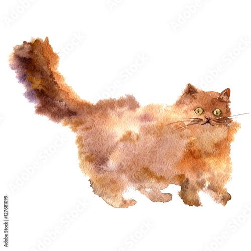 Plexiglas watercolor brown fluffy cat