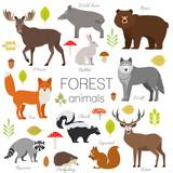 Set of forest animals isolated vector. Moose, wild boar, bear, fox, rabbit, wolf skunk raccoon deer squirrel hendgehog