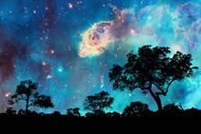 Paysage de nuit avec la silhouette des arbres et nuit étoilée