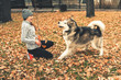 Image of young girl playing with her dog, alaskan malamute