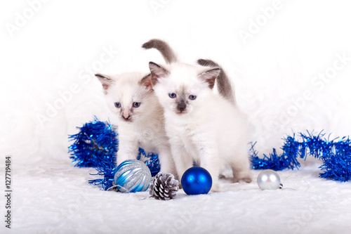 Poster, Tablou Siamese kittens with Christmas balls
