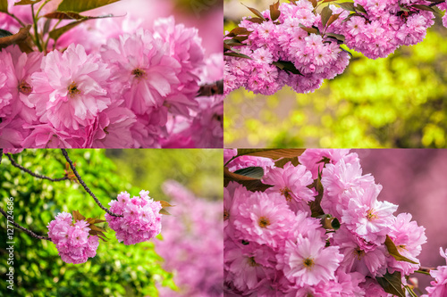 Poster pink flowers of sakura branches on blury background image set
