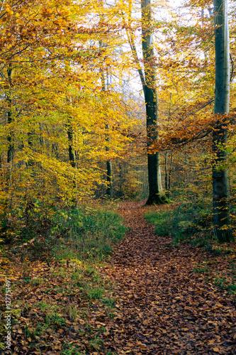 Papiers peints Route dans la forêt Waldweg im Herbst