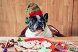Dog with Christmas elf hat