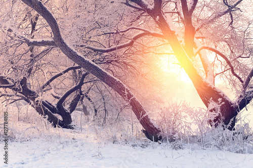 Foto op Canvas Wit Sunny Christmas morning