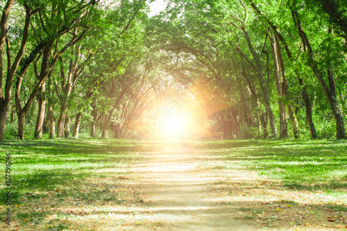 Fairytale forest landscape - 127796246
