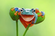 Tree frog smile
