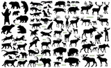Fototapety Big mammals of the northern lands vector silhouettes collection