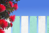 Pohutukawa flowers blossom over wooden fence in New Zealand