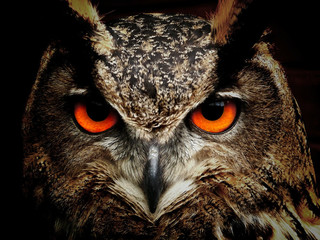 Eule mit roten Augen