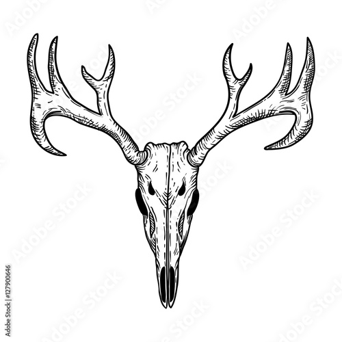Fotobehang Hipster Hert stylized Deer Skull sketch hand drawn original illustration. design for clothing print, postcards, cards, cover, tattoo design bohemian boho outline style. isolated on white background