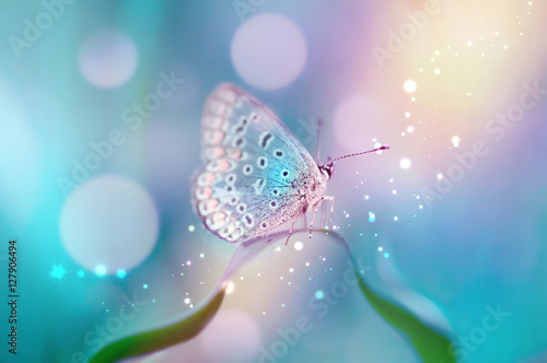 Beautiful white butterfly on white flower buds on a soft blurred blue background spring or summer in nature. Gentle romantic dreamy artistic image, beautiful round bokeh. - 127906494