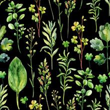 Vattenfärg äng ogräs och örter seamless