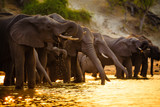 Elephants in Chobe National Park - Botswana