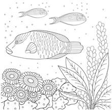 motif Doodle en noir et blanc. motif Marine pour livre de coloriage. Mer, poissons, algues, bulles. livre de coloriage pour les enfants et les adultes .__