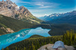 Morning Reflections at Peyto Lake