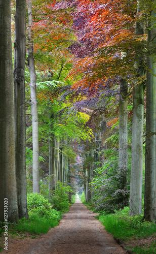 przejscie-w-zielonym-wiosna-buku-lesie-w-leuven-belgia