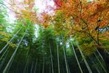 京都の紅葉と竹林