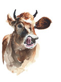 cow head portrait watercolor painting illustration isolated on white background