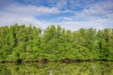 Mangrove, mangrove forest, mangrove in Asia, mangrove swamp, preserved mangrove, tree roles, lush marsh, dense swamp, wetland,