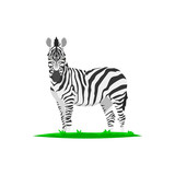 zebra and grass illustration