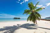 Tropical beach with palm tree - 128029489