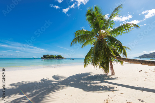 Foto Murales Tropical beach with palm tree