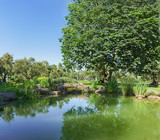A pond in an olive grove Park, Paradise. Partenit, Crimea, Russia